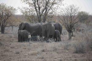_13A5692 elephants sm