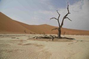 _13A6441 petrified tree sm