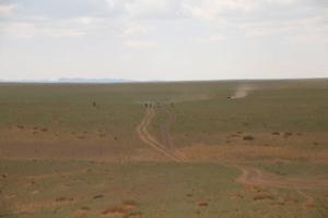 Mongolia Field