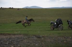 Mongolia Pony