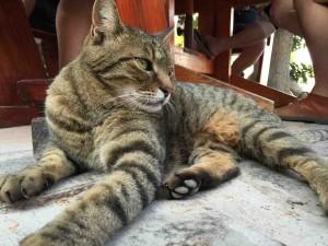 SA Kitty