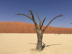 SA Petrified Tree